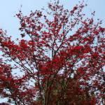 """""""Tree at Missouri Botanical Garden"""" by hdurham0490"""
