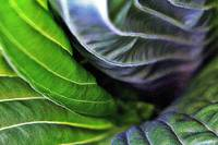 Abstract Hosta Leaves