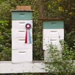"""""""Prize Winning Bees"""" by Newleaf"""