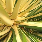 """Agave"" by Newleaf"