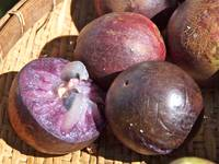 Purple Starapple (Caimito)