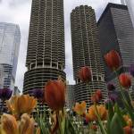 """Marina Towers in Spring"" by ZPPhoto"