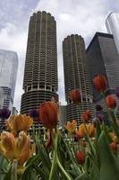 Marina Towers in Spring