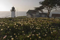 Lighthouse with  Wildflowers