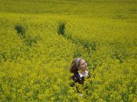 Canola Fields Forever,Serenity Now