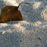 """""""Leaf in Sand"""" by tisbod"""