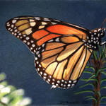 """Monarch #6"" by denisejhowardart"