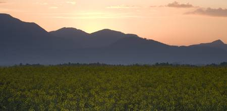 Sunrise over the kamnik alps and rapeseed