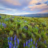 """High Desert Spring"" by Dawsonimages"