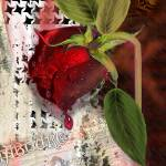 """""""As the Rose Weeps"""" by AlmaLee"""