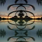 """""""Avian Palm"""" by mdarrah"""