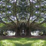 """Banyan Chapel"" by mdarrah"