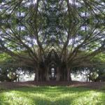 """Banyan Chapel"" by mdarrah"