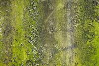 Abstract Concrete Close-up Texture photograph 0321