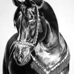 """Black Beauty"" by thebid"