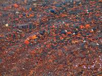 Red Beach Closeup