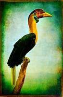 Portrait of a Hornbill in profile
