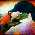 """Portrait of a Toucan"" by alanshapiro"