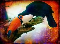 Portrait of a Toucan