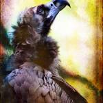 """Portrait of a Cinerous Vulture Seeking Guidance"" by alanshapiro"