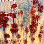 """Rusty Poppies"" by Guin"