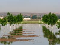 Irrigating New Pecan Orchards