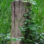 """Stumped"" by JanaSinor"