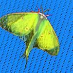 """""""Luna Moth (Actias luna)"""" by shelshots"""