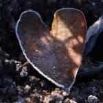 """""""Cold heart"""" by bibbiw"""