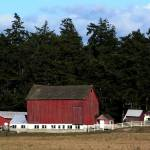 """Whidbey Barn No More"" by gopnw"