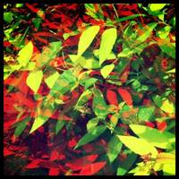 Leaves, Red and Green