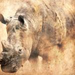 """""""Rhino in the Dust"""" by NAR90"""