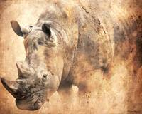 Rhino in the Dust