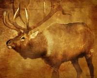 Graphic Elk