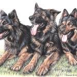 """Long-haired German Shepherds"" by ArtsandDogs"