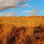 """Grass II"" by bwright923"