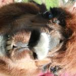 """Smiling Llama"" by jilloriente"