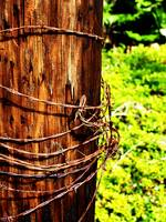 Barbed Wire on a Telephone Pole