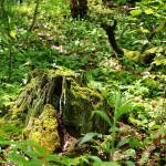 """Mossy Stump in the Woods"" by jamisonsyphersphotography"