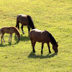 """Horses family in Poland"" by Piotr_Marcinski"