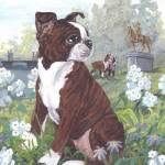"""Boston Terrier Puppy Dog Art"" by artbykkay"