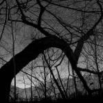 """tree"" by kaykay07"