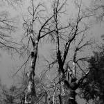 """Barren Trees"" by jamisonsyphersphotography"