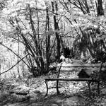 """Bench and Birdfeeder"" by jamisonsyphersphotography"