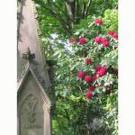 """Mount Auburn Cemetery Gothic Rhododendron"" by CuriousEye"
