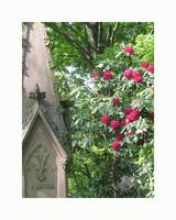 Mount Auburn Cemetery Gothic Rhododendron
