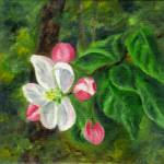 """Apple Blossoms"" by FTMcKinstry"