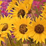"""Sun Flowers"" by artstoreroom"