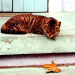 """Napping Cat in the Marigny, New Orleans*"" by stephaniemaria2001"