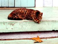 Napping Cat in the Marigny, New Orleans*